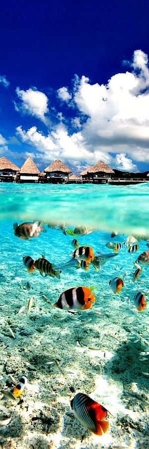 Tikehau Island, French Polynesia