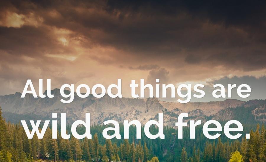 Best Nature Quotes (8)