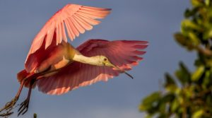 25 Bird Photography Inspiration