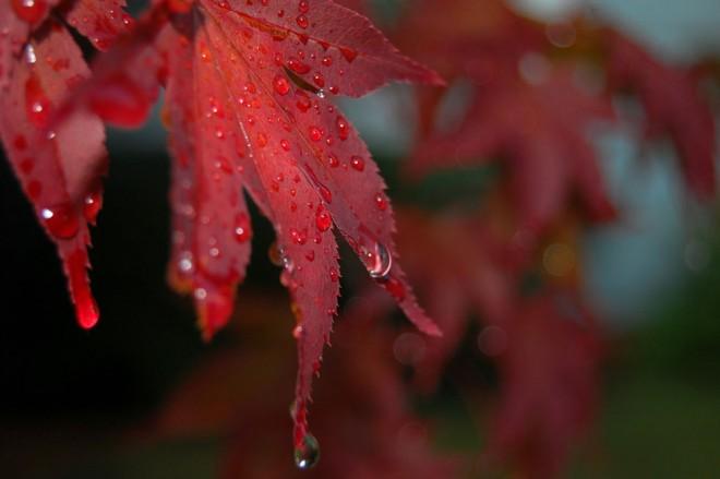 Rain (15)