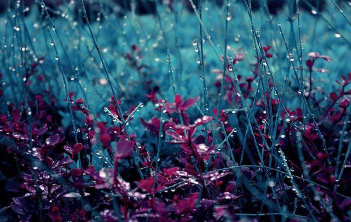 Rain (8)