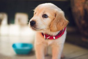 Peaceful Mealtime: How to Prevent Dogs From Fighting Over Food
