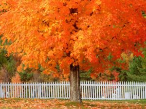 Is it Healthy for the Lawn If You Don't Touch Falling Leaves?