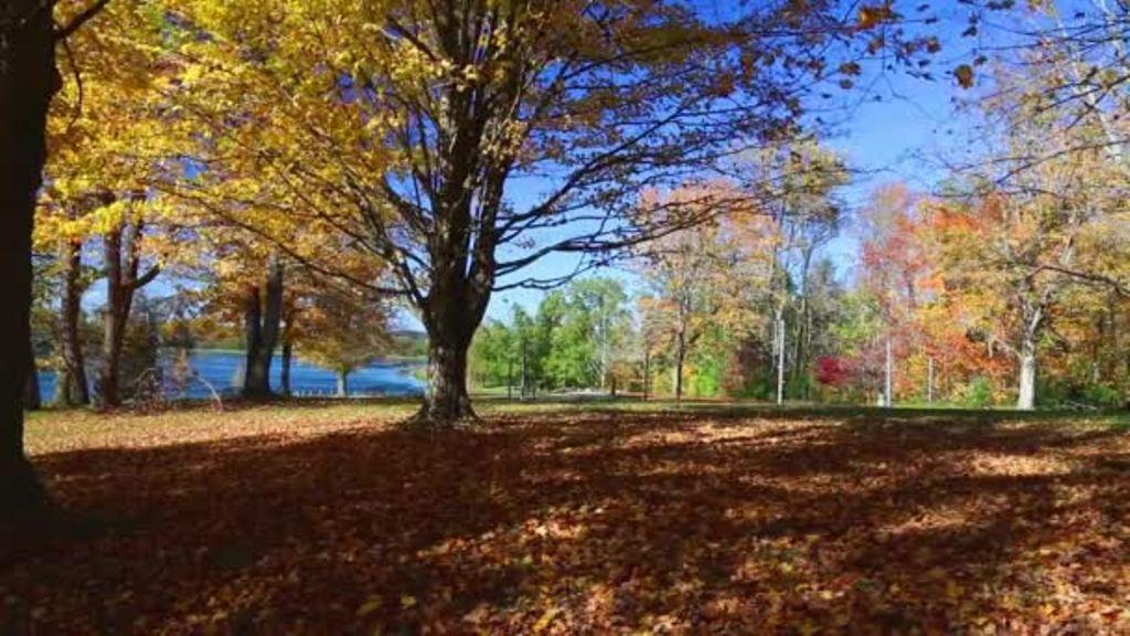 Falling Leaves in garden