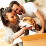 A Guide To Transporting Pets